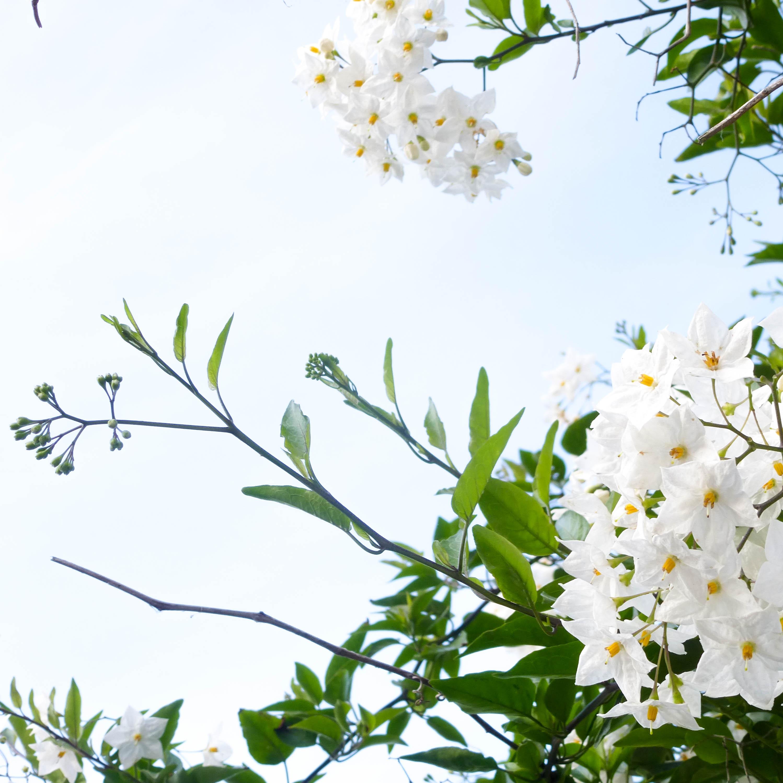 le-conquet-fleur-carre