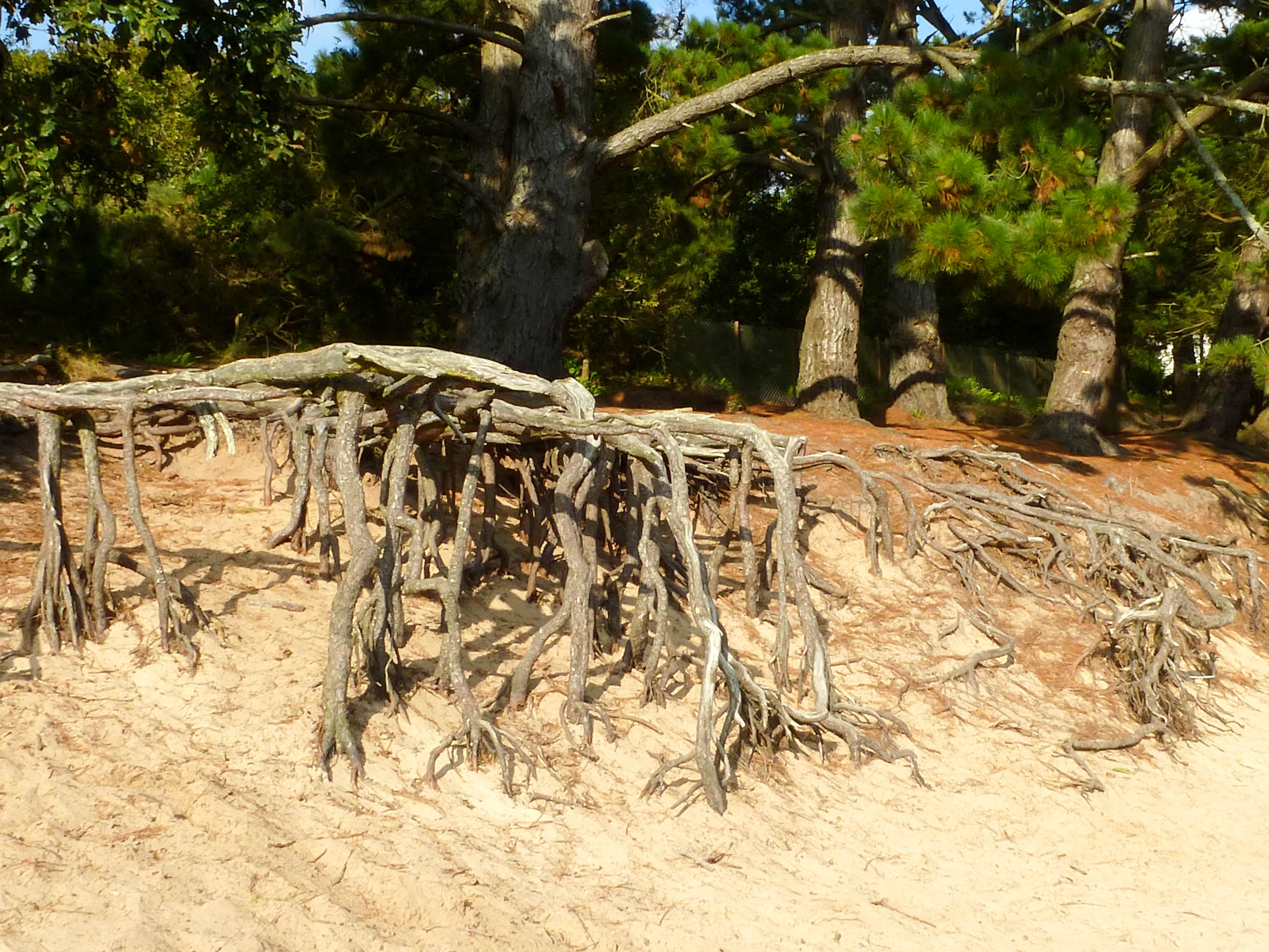 le-conquet-lanfeust-3-racines