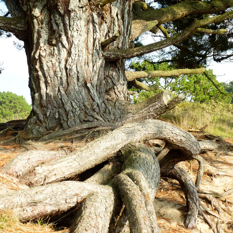 le-conquet-lanfeust-6-arbre-racines