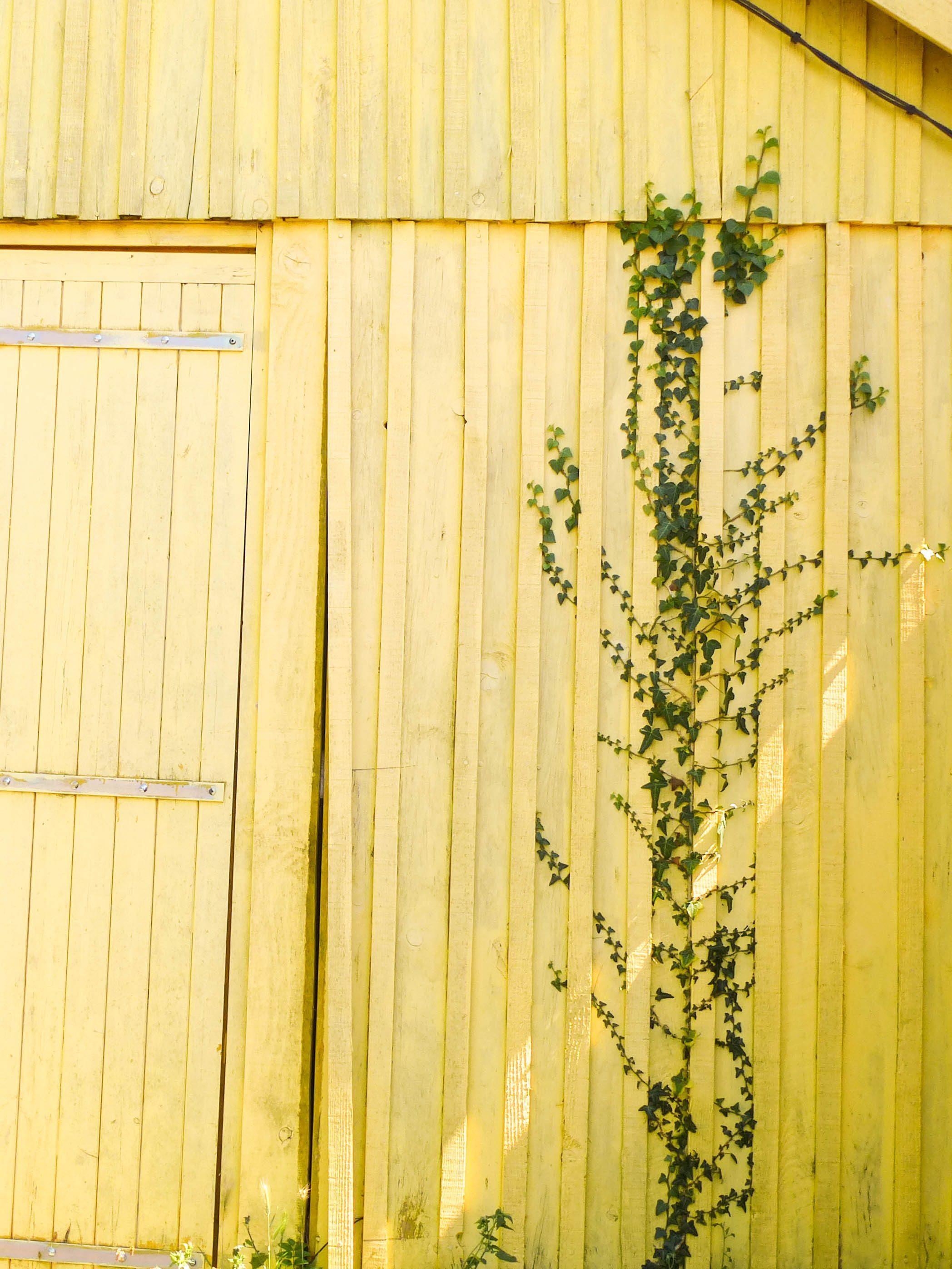 cabane jaune