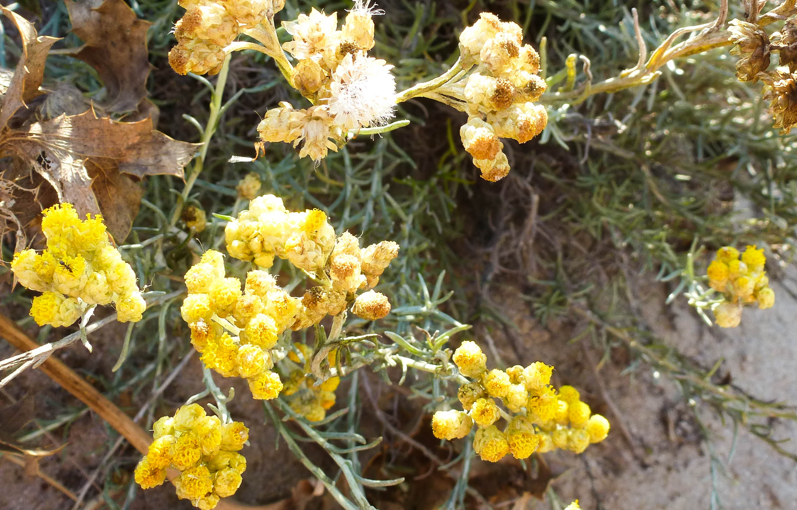 fleurs-jaunes-bis