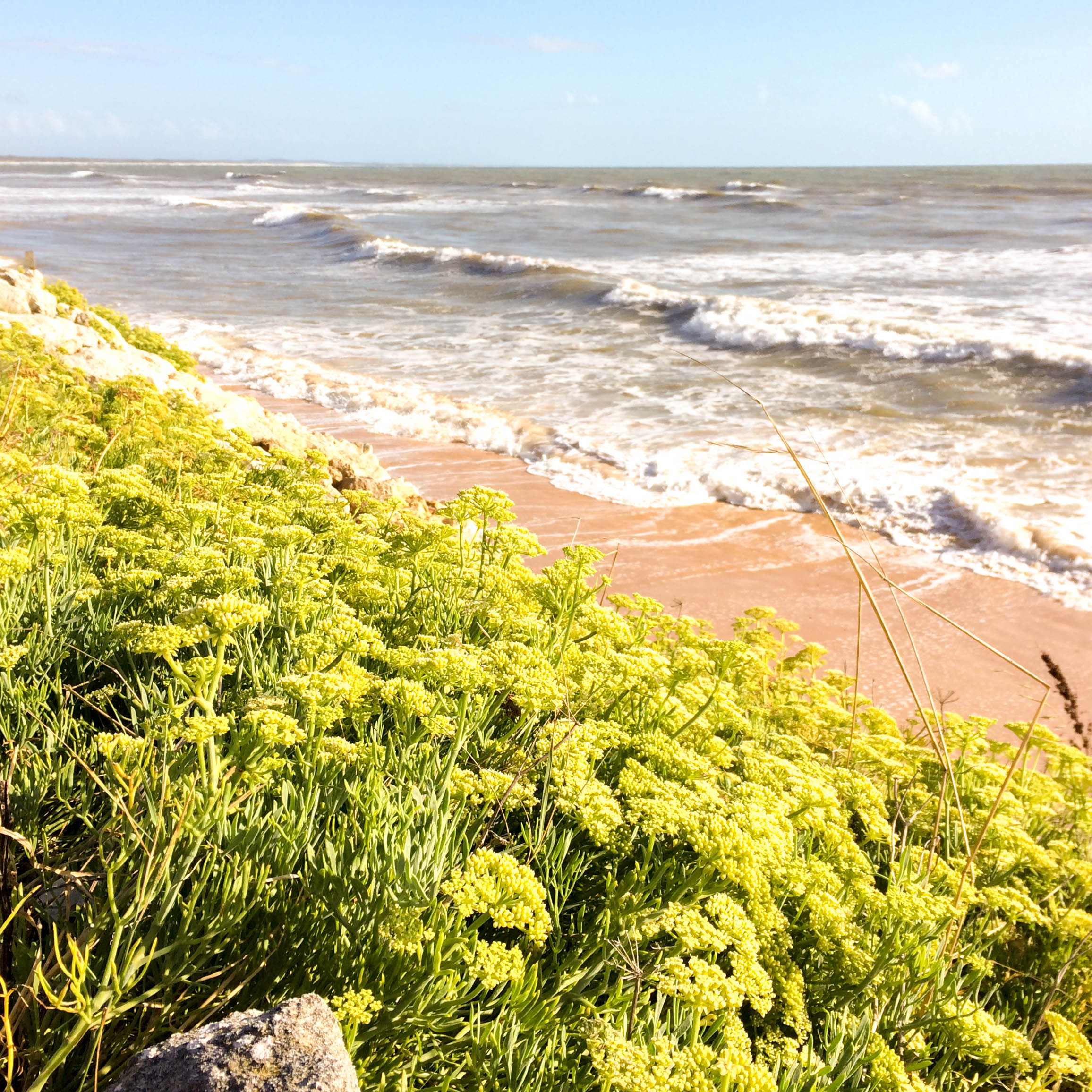 plage vert bois 4