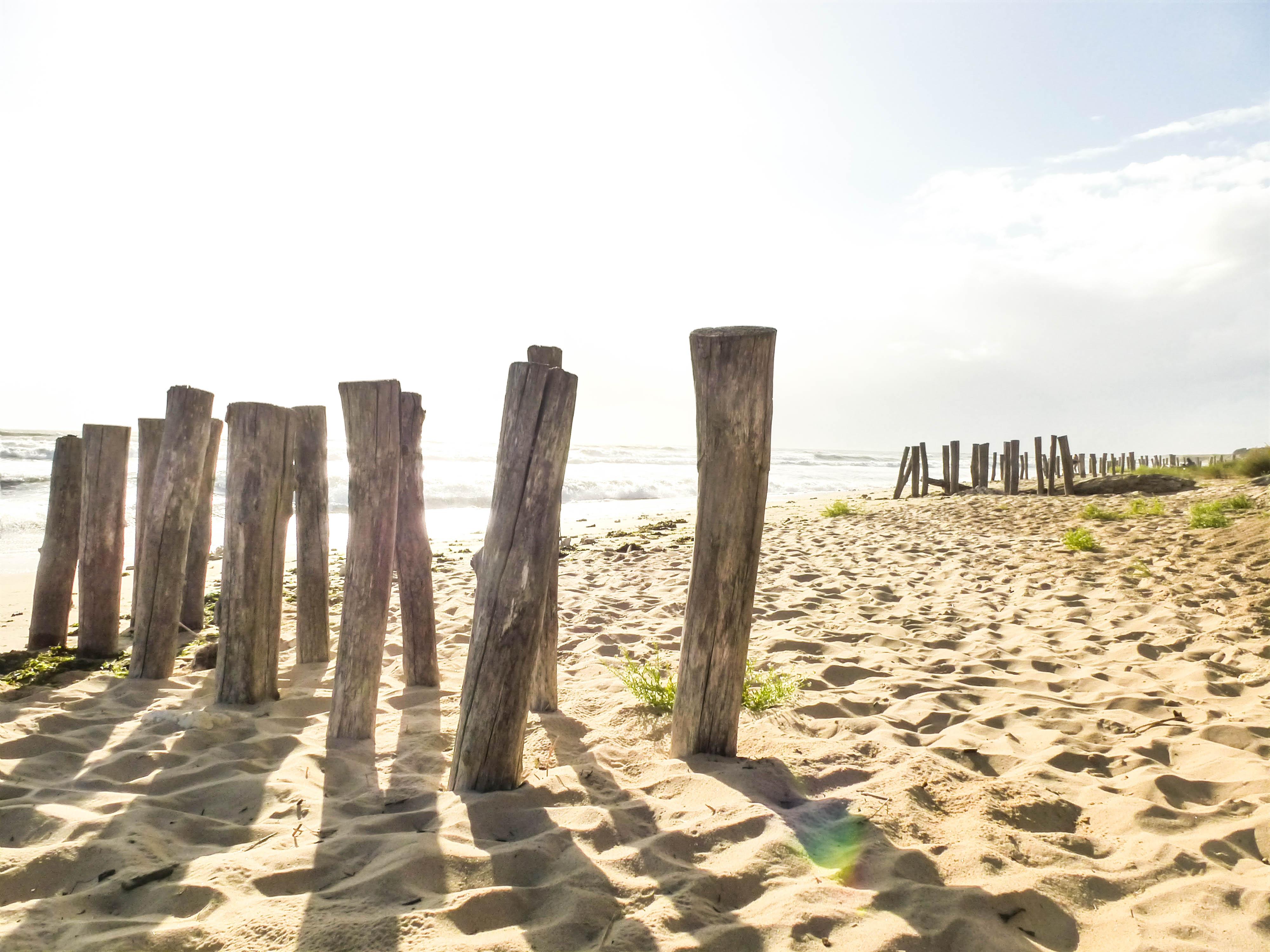 plage vert bois2